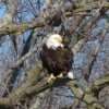 Domestic abuser caught after shooting eagles, then sent to prison