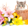 FDA warns that lilies could kill your cat
