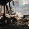 Scores dead and injured in Iraq suicide attack