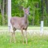 Arizona man charged with deer poaching in Iowa
