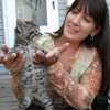 Too many kittens a cause for concern for Humane Society