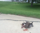 Police called after driver allegedly intentionally runs over geese at Clear Lake