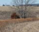 Iowa pheasants strong; quail highest in 27 years