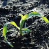 April's cold and snow shouldn't worry farmers – yet – Iowa State agronomist says