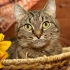 Humane Society Celebrates National Adopt-A-Cat Month