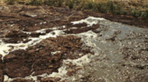 Iowa DNR investigating a manure discharge in Cherokee County