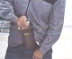 Mason City police seek booze thief