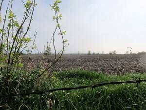 Cerro Gordo county farmland
