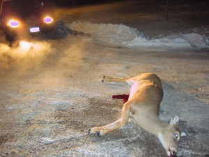 deer-shot-dead-in-mason-city-shooters-ecaped-2012-12-27