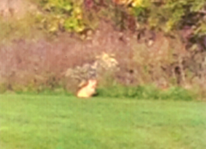 Low-resolution cel phone photo of creature