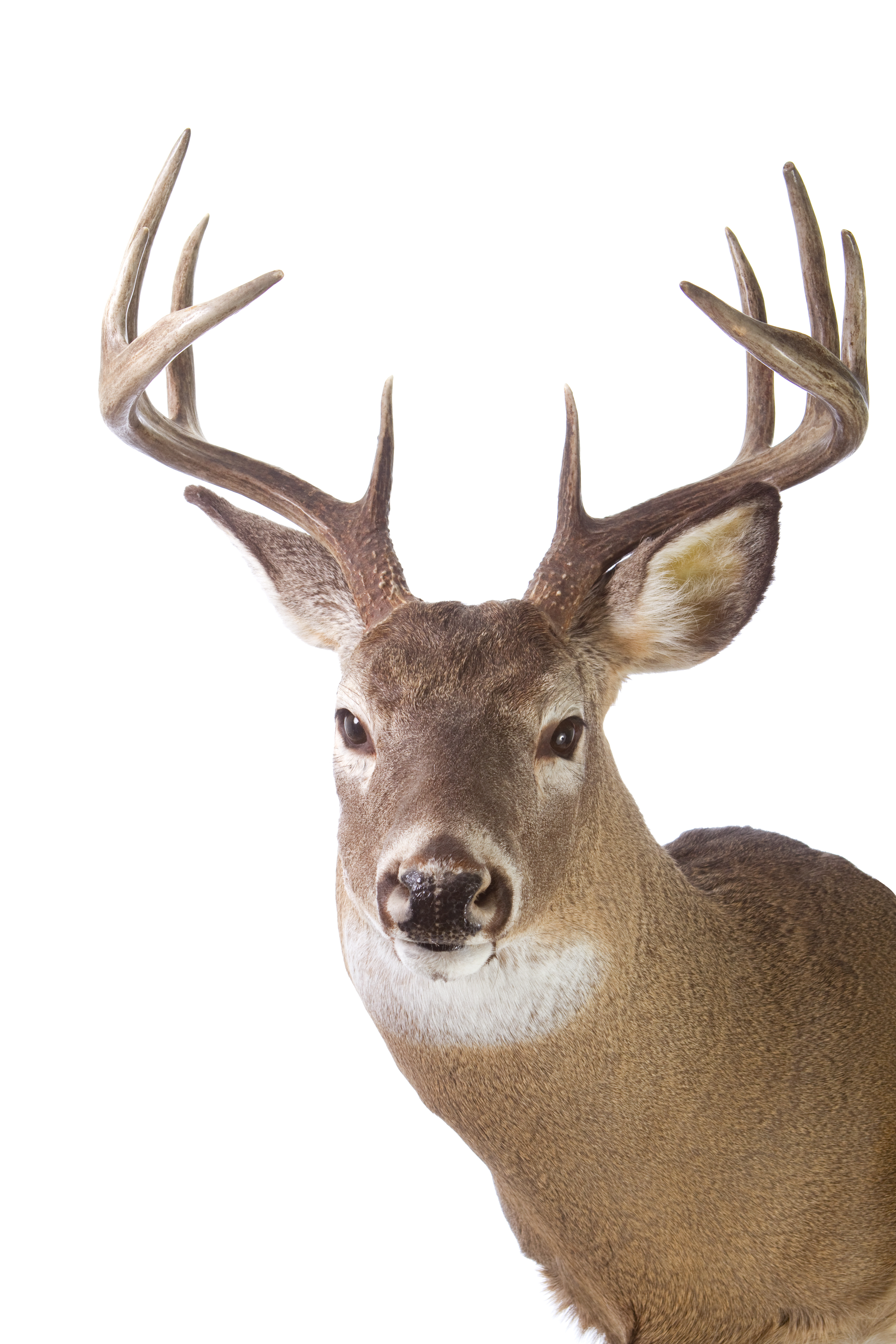 iowa man ordered to pay over 4k for illegal poaching of deer